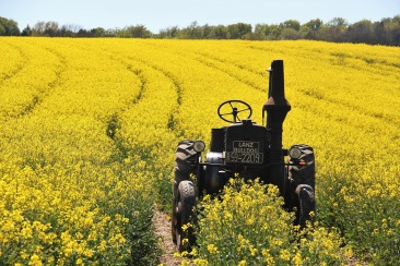 field-of-rapeseeds-1382772_1920